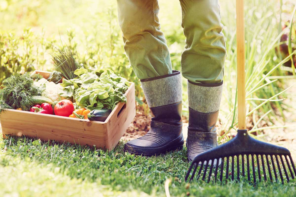low-section-male-farmer-with-vegetable-box_fp_c